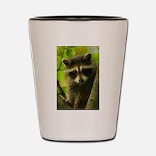 Cute Raccoon Shot Glass