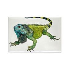 Gorgeous Green Iguana Magnets
