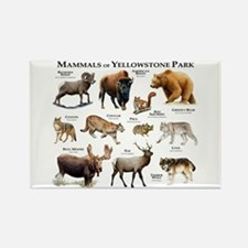 Mammals of Yellowstone National P Rectangle Magnet