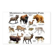 Mammals of Yellowstone Na Postcards (Package of 8)