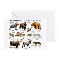 Mammals of Yellowstone National Park Greeting Card