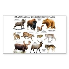 Mammals of Yellowstone Nationa Decal