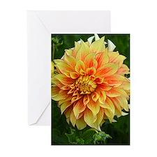 Orange and yellow dahlia flower Greeting Cards