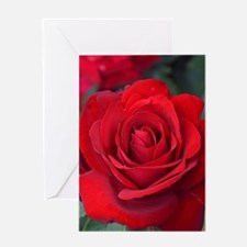 Beautiful single red rose Greeting Cards