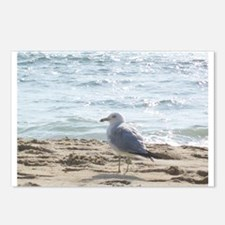 Funny Seagull Postcards (Package of 8)