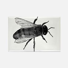 Black Bee Magnets