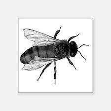 Black Bee Sticker