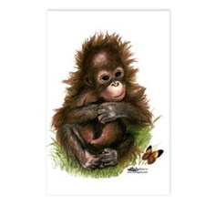 Orangutan Baby And Postcards (package Of 8)