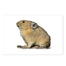 Cute Wild rabbit Postcards (Package of 8)
