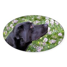 Labrador in the flowers Decal