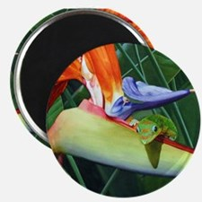 Cute Amphibians and reptiles Magnet