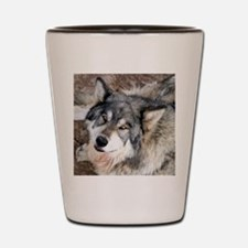 Wolf looking up Shot Glass