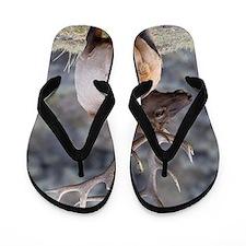Cute Elk Flip Flops
