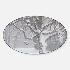 Old Tree in a Blizzard Sticker (Oval)