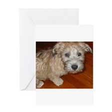 Glen_of_Imaal_Terrier wheaton Greeting Cards
