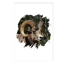 Bighorn Sheep - Ram Postcards (Package of 8)