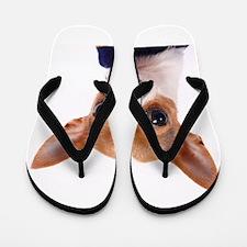 Funny Chihuahua Flip Flops