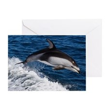 White Sided Dolphin Riding Wake Greeting Card