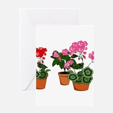 Planters of Mixed Geraniums Greeting Cards