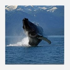 Humpback Whale Breaching Alaska Tile Coaster