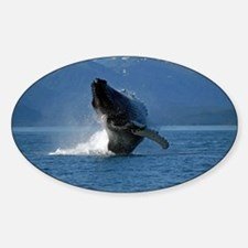 Humpback Whale Breaching Alaska Decal
