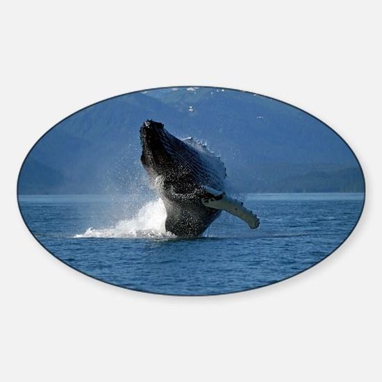 Humpback Whale Breaching Alaska Sticker (Oval)