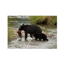 Black Bear and Cub with Salmon Rectangle Magnet