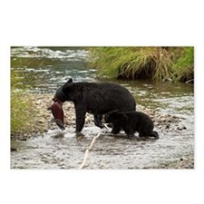 Black Bear and Cub with S Postcards (Package of 8)