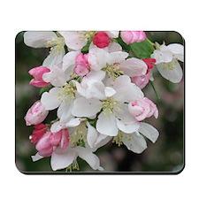 Cherry Blooms Mousepad