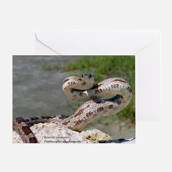 Cute Snake Greeting Card