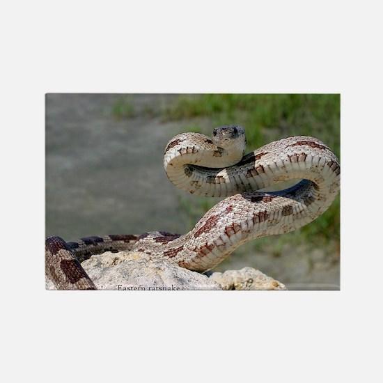 Cute Snake Rectangle Magnet