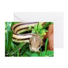 Unique Snake Greeting Card