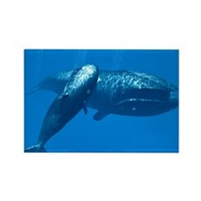 Right whale mother and calf Magnets