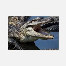 Images for Croc Calendar Rectangle Magnet