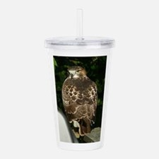 Red-tailed Hawk Acrylic Double-wall Tumbler