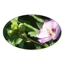 Cute Rose of sharon Decal