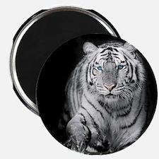 White Tiger Magnets