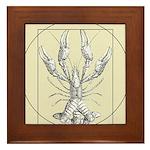 Vetruvian Crawfish1 Framed Tile