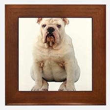 Cute Bulldogs Framed Tile
