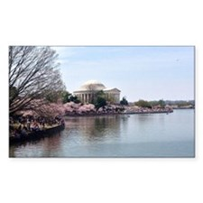 Blossoms in DC Decal