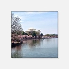 "Blossoms in DC Square Sticker 3"" x 3"""