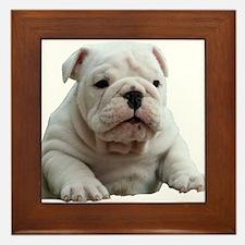 Cute Bulldog Framed Tile