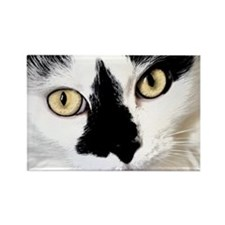 Cookie the Cat Rectangle Magnet