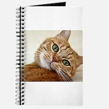 Funny Orange cats Journal