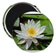 White Lotus Flower Magnets