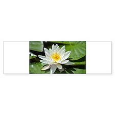 White Lotus Flower Bumper Bumper Sticker