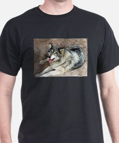 Wolf resting T-Shirt