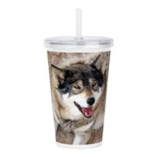 Cute Gray wolf Acrylic Double-wall Tumbler