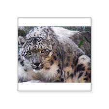 snowleopard Sticker