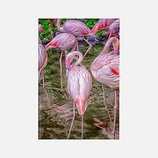 Pink Flamingos Rectangle Magnet